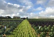 Konferencja nt. warzyw kapustnych we Francji