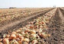 Większe wsparcie dla grup producentów rolnych