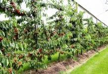 W Bułgarii przybywa sadów
