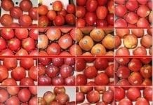 WAPA: zapasy jabłek styczeń 2018. Włosi mają więcej niż Polacy