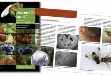 Drosophila suzukii – jest źle, a będzie jeszcze gorzej!!!