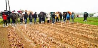 Dzień Otwarty Warzyw Polowych w Dwikozach