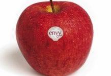 Envy najlepszym jabłkiem według amerykańskich konsumentów