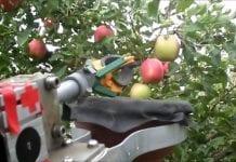Izrael: Powstaje robot do zbioru jabłek