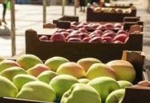 W USA zapasy jabłek o 20 proc. wyższe