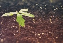 Polska wzbogaciła się o milion nowych drzew