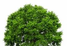 Amerykański gwiazdor estrady sadzi drzewa