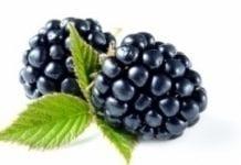 Holandia: zmiany na plantacjach jagodowych
