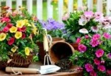 Wyrok w sprawie ogródków działkowych odroczony
