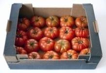 Mniejsze kontrole w imporcie pomidorów z Maroka