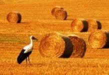 Polski pomysł na bioenergetykę
