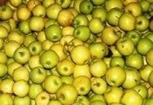 Rynek zapchany jesiennymi odmianami