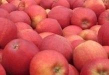 Tesco stawia na polskie jabłka