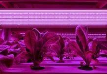 Ogrodnictwo wspomagane światłem LED