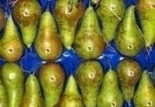 Mniej gruszek z Belgii, ale więcej z Chin