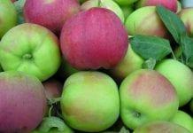 Problemy węgierskich producentów jabłek