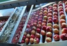 Do końca marca plan restrukturyzacji spółki Owoc Sandomierski