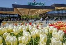 Holenderski ogród Keukenhof otwarty