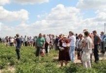 Aktualna ocena plantacji pomidorów