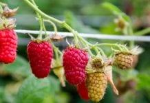 Prognozy dla ukraińskiego ogrodnictwa