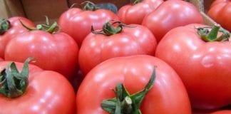 Sezon pomidorowy 2018 w Europie