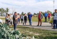 Kalafiory w Młodzieszynie – dorodne na przekór pogodzie