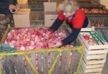 Zgoda na import jabłek z Mołdowy