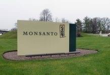 Bayer przejmuje Monsanto, ale nie będzie nowych upraw GMO w Europie