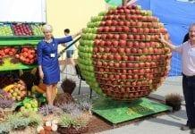 Europejskie Święto Jabłka 2015 w Obrazowie