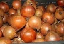 Światowy handel cebulą