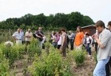 Można produkować ekologicznie drzewka i owoce