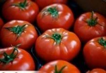 Certyfikat dla pomidorów z Łaszkowa
