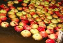 Pozbiorcza ochrona jabłek i gruszek – już możliwa