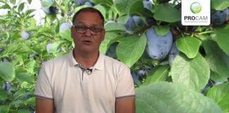 Komunikat sadowniczy PROCAM z 24.07