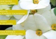 """W październikowych """"Roślinach Ozdobnych"""" – targowo"""