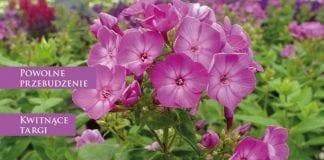 """Kwietniowe """"Rośliny Ozdobne"""" o Gardenii i nie tylko"""