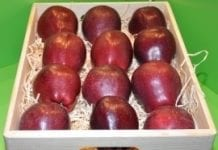 Włoskie zbiory jabłek