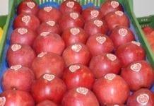 Mocny wzrost eksportu nowozelandzkich owoców