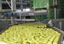 Więcej afrykańskich jabłek do Europy