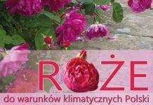 """""""Róże do warunków klimatycznych Polski"""" – nowość w ofercie Plantpressu"""