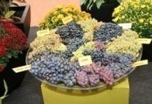 Skierniewickie Święto Kwiatów, Owoców i Warzyw po raz 35!