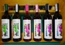 W Sandomierzu z młodym winem