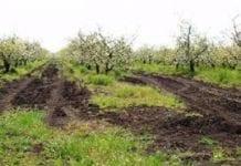 Rolnictwo w budżecie Ukrainy