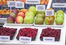 Projekt Biosafefood