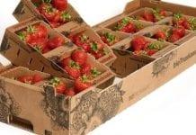 Fruit Logistica Innovation Award 2017