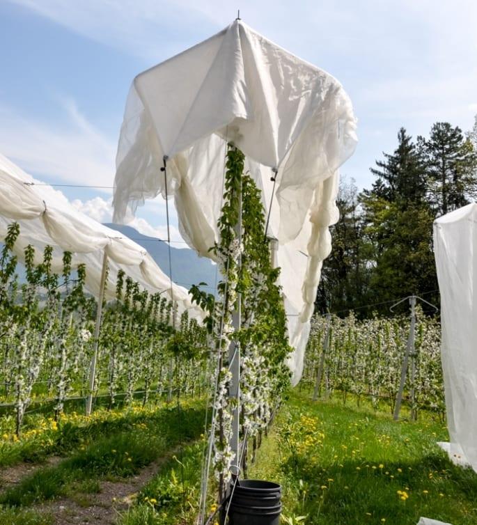 Kwitnące sady w okolicy Val di Non