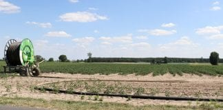 Odszkodowania nie pokryją wszystkich strat spowodowanych suszą