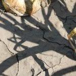 Przeciwdziałanie skutkom suszy – katalog działań