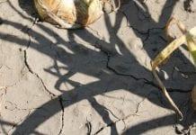 Zmniejsza się zasięg suszy rolniczej