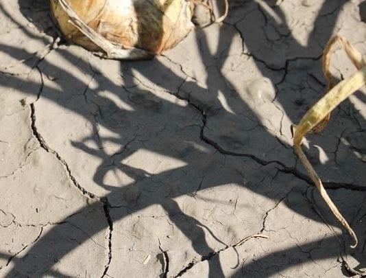 Rolnicy zwolnieni z opłat za wodę
